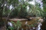 Rainforest creek in West Kalimantan