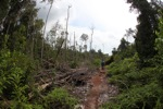 Devastated rainforest landscape in Borneo [kalbar_1102]