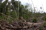 Destroyed rainforest landscape in Borneo [kalbar_1110]