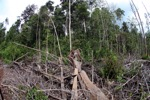 Destroyed rainforest landscape in Borneo [kalbar_1112]