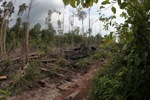Edge between forest and deforestation