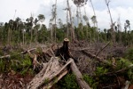 Destroyed rainforest landscape in Borneo [kalbar_1118]