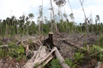 Devastated rainforest landscape in Borneo [kalbar_1115]