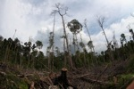 Devastated rainforest landscape in Borneo [kalbar_1119]
