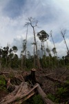 Devastated rainforest landscape in Borneo [kalbar_1121]