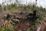 Destroyed rainforest landscape in Borneo