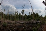 Devastated rainforest landscape in Borneo [kalbar_1100]