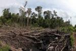 Destroyed peat land in Borneo [kalbar_1138]