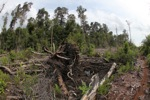 Destroyed peat land in Borneo [kalbar_1123]