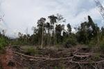 Destroyed peat land in Borneo [kalbar_1142]