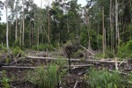Destroyed peatland in Borneo [kalbar_1155]