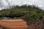 Illegally logged timber cut from a Borneo rainforest