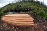 Illegally logged wood cut from a Borneo rainforest [kalbar_1166]