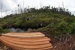 Illegally logged wood [kalbar_2230]