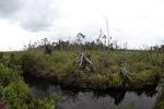 Destroyed peatland in Borneo