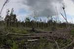 Destroyed rain forest landscape in Borneo [kalbar_1162]