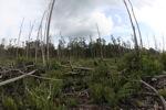 Destroyed rain forest landscape in Borneo [kalbar_1165]