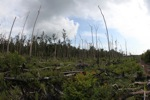 Destroyed rain forest landscape in Borneo