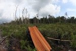 Illegally logged wood cut from a Borneo rainforest
