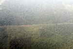 Aerial vew of cleared peatlands in Indonesia's West Kalimantan province [kalbar_1193]