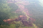 Airplane vew of cleared peatlands in Indonesia's West Kalimantan province [kalbar_1215]