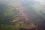 Airplane vew of cleared peatlands in Indonesia's West Kalimantan province [kalbar_1207]