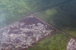 Airplane vew of cleared peatlands in Indonesia's West Kalimantan province [kalbar_1219]