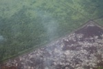 Airplane vew of cleared peatlands in Indonesia's West Kalimantan province [kalbar_1220]