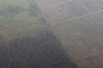 Aerial view of forest and land cleared for oil palm plantations [kalbar_1270]