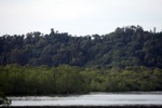 Coastal rainforest and mangroves in Sukadana [kalbar_1312]