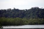 Coastal rainforest and mangroves in Sukadana [kalbar_1312]