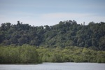 Coastal rainforest and mangroves in Sukadana [kalbar_1305]