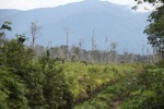 Forest clearing near Sukadana