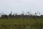 Deforested peat forest in Indonesian Borneo [kalbar_1319]
