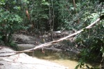 Poachers camp in Borneo national park