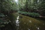 Beautiful rainforest stream