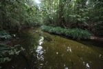 Spectacular rainforest stream
