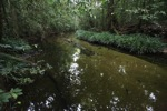 Spectacular jungle stream