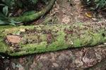 Rain forest fungi [kalbar_1380]