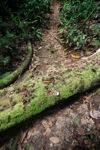 Rain forest fungi