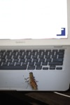 Grasshopper on an Apple computer