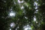 Shrub layer in the rainforest [kalbar_1482]