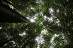 Rainforest canopy [kalbar_1476]