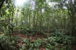Shrub layer in the rainforest