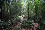 Local jungle guide in Borneo