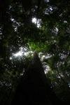 Rainforest in West Kalimantan, Indonesia [kalbar_1488]
