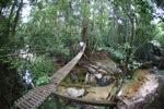 Bridge over a rainforest creek [kalbar_1498]