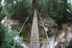 Bridge over a rainforest creek [kalbar_0261]