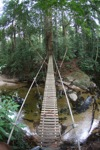 Bridge over a rainforest creek [kalbar_1499]