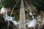 Bridge over a rainforest creek [kalbar_1500]